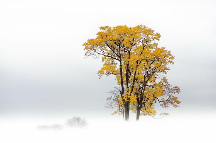 Jesień, Drzewo, Mgła
