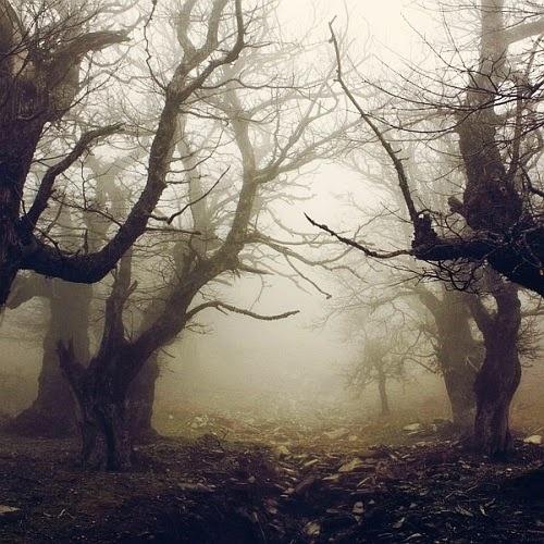 Dark Forest, Evia, Greece