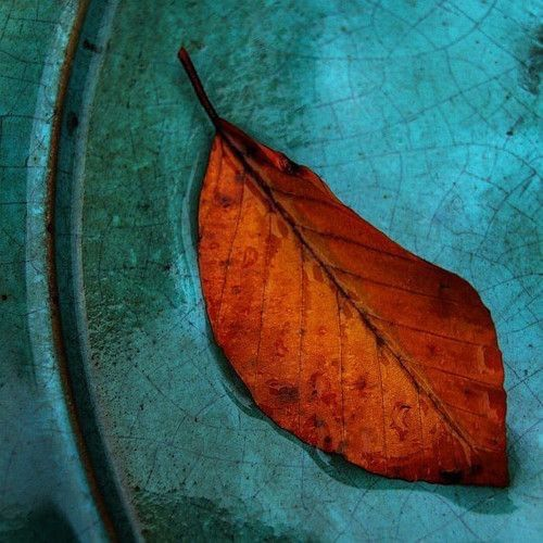 What Color Compliments Burnt Orange: 474 Best Images About Autumn Amber/Aqua On Pinterest