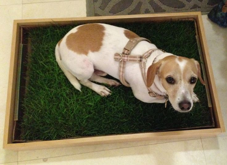 Image Result For Pooch Patch Real Grass Dog Potty