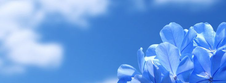 Znalezione Obrazy Dla Zapytania Tapety Na Fb Blue Flower Wallpaper Blue Flower Pictures Blue Background Wallpapers