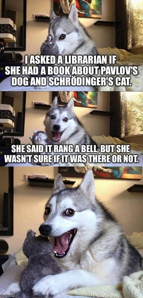 Schrodinger's Dog - more at http://www.thelolempire.com
