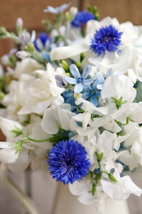 White sweet peas, white freesias, light blue tweedia and electric blue cornflowers.