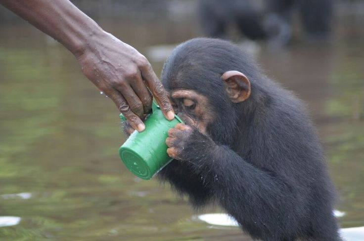 Creating new worlds for Liberia's abandoned chimpanzees — Photographers Without Borders