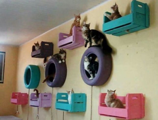 Pin By Kendra Lea On Things To Create Or Memes Cat Room Cat Wall Shelves Cool Cat Trees