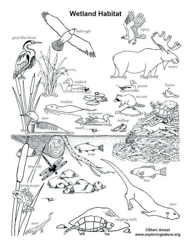 Animal Habitat Coloring Pages Animal Habitat Coloring Pages Animal