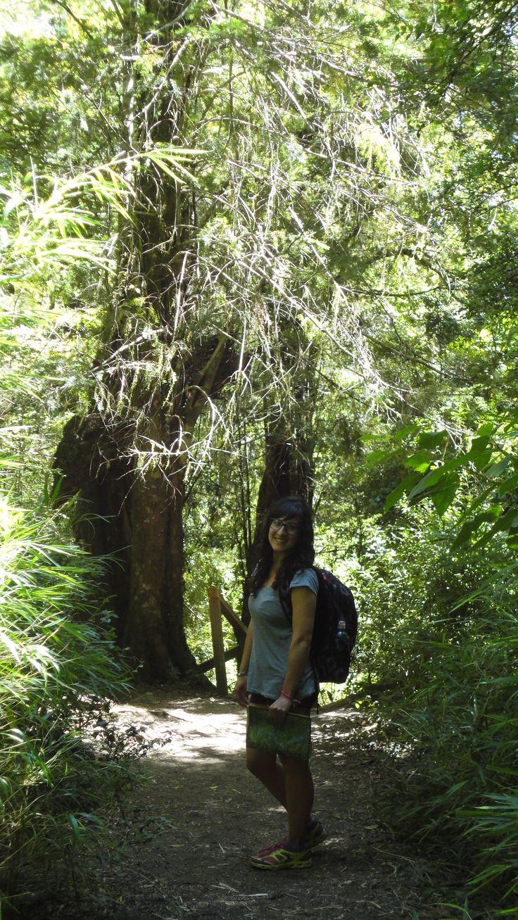 Sendero La Leona, Huilo Huilo - Chile
