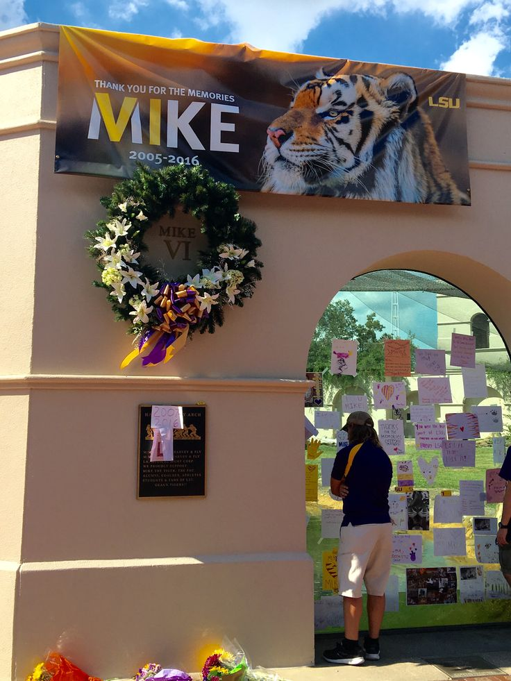 10/15/16 RIP MIKE THE TIGER