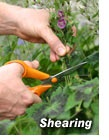 Deadheading Tips: Gardener's Supply