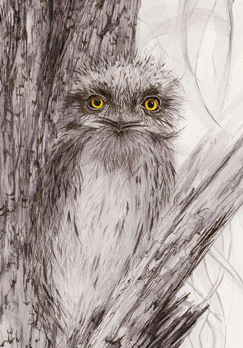 Artwork Tawny Frogmouth Proud Dad  Open edition by DaisyClaridge