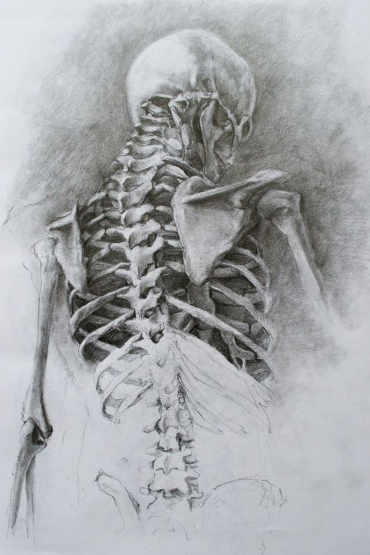 Back skeleton anatomy