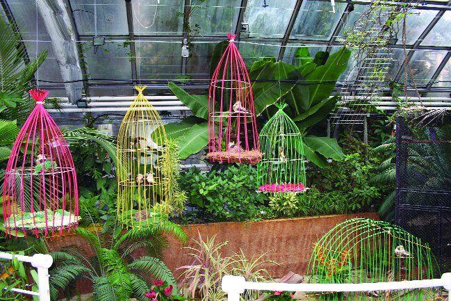 Každý rok trochu ožije botanická zahrada v Brně výstavou exotického ptactva. Ideální doba ke krátké prohlídce s dětmi.