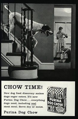 1958-PURINA-Dog-Chow-Cute-ENGLISH-POINTER-Dog-Chow-Time-VINTAGE-AD