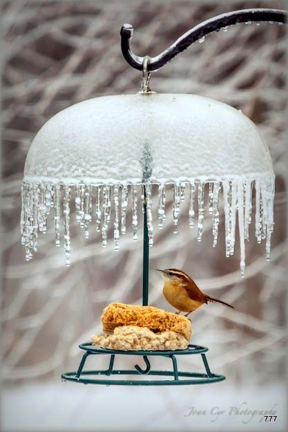 Love the photo, but also like the idea. Great way to shelter them while they get their seed.