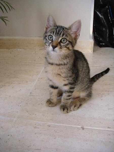 Mascota en adopción en Adoptaloo.com - Lennon busca familia.