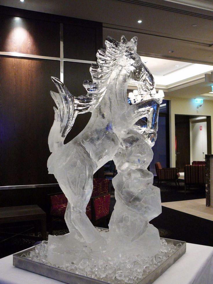 wildlife  ferrari rearing horse