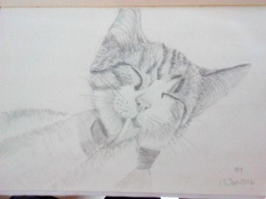 Cat sketching practice #009
