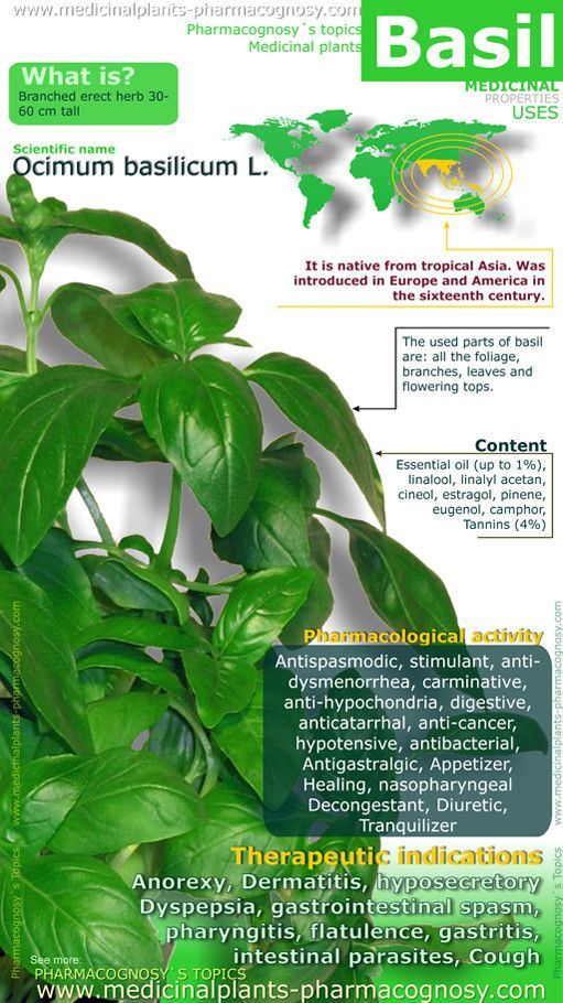 Basil health benefits. Infographic. Summary of the general characteristics of the Basil. Medicinal properties, benefits and uses more common. Basil leaves contents.  http://www.medicinalplants-pharmacognosy.com/herbs-medicinal-plants/basil-benefits/healt-benefits-infographic/