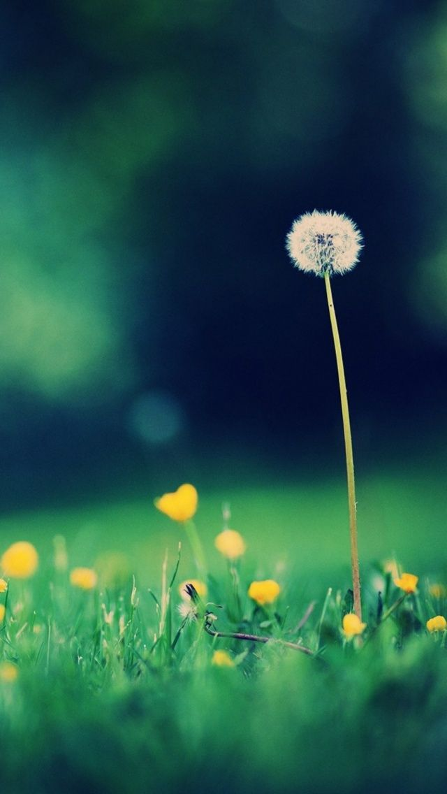 12 best blue backgrounds images on pinterest phone backgrounds morning dandelion find more summer themed wallpapers for your voltagebd Gallery