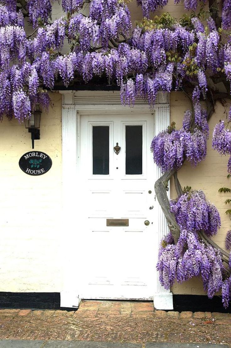 door with wisteria - London, England