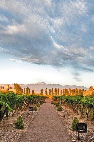 Estoe es el Cavas Wine Lodge en Mendoza, Argentina. Esto es donde los ingredientes para hacer el vino está siendo adulto.