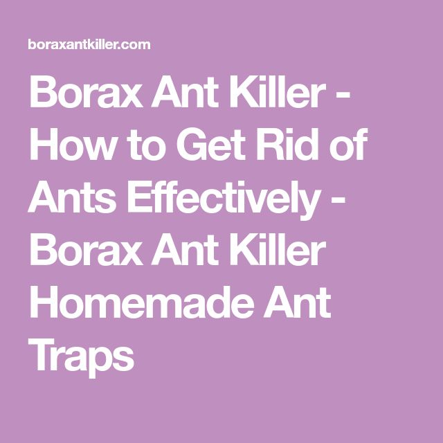 Borax Ant Killer - How to Get Rid of Ants Effectively - Borax Ant Killer Homemade Ant Traps