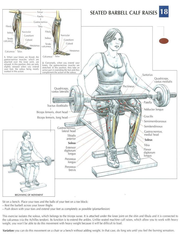 Seated Barbell Calf Raises ~ Re-Pinned by Crossed Irons Fitness
