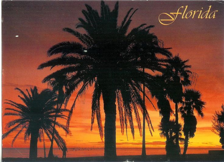 Florida Palm Trees | Florida Palms | Remembering Letters and Postcards