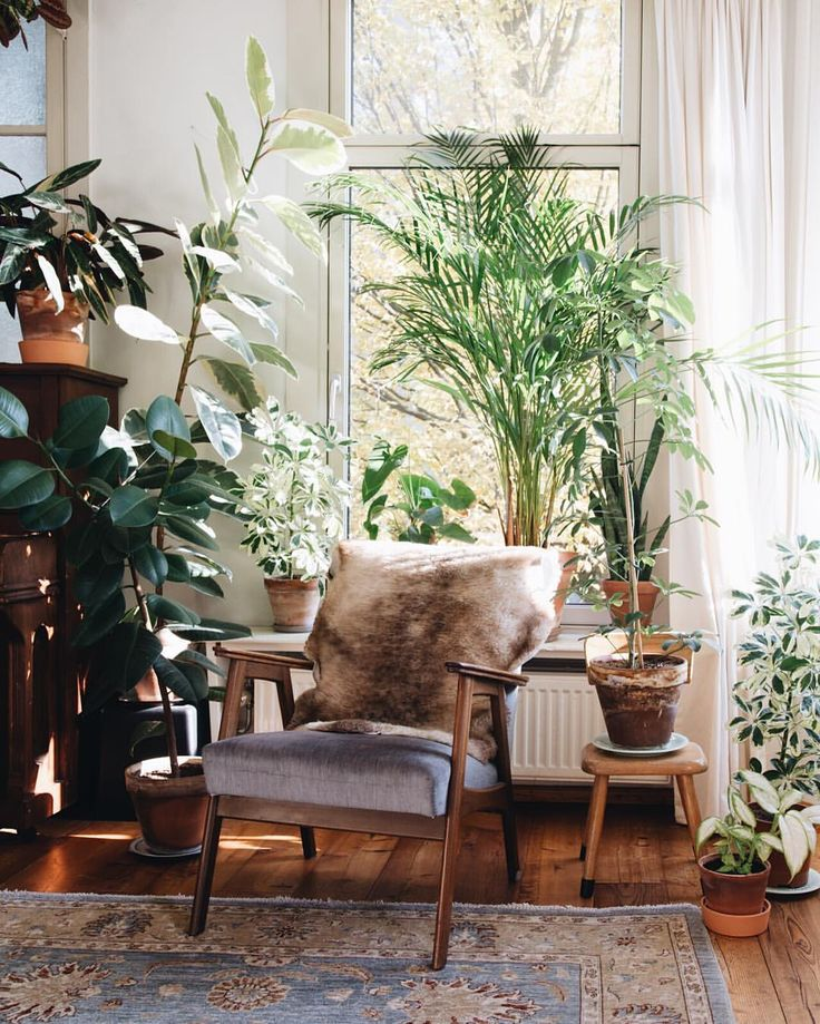 1000 ideas about indoor plant decor on pinterest black - Decorer son interieur ...