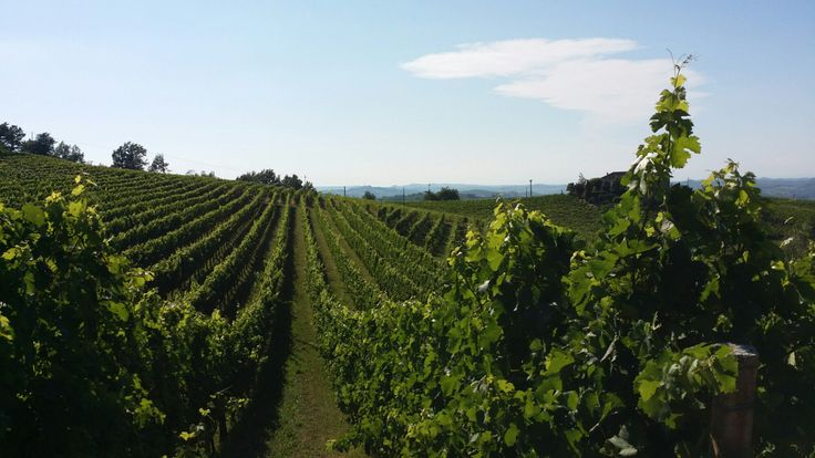 https://cascinagaritina.wordpress.com/2014/07/25/nizza-makes-its-debut-with-harvest14/