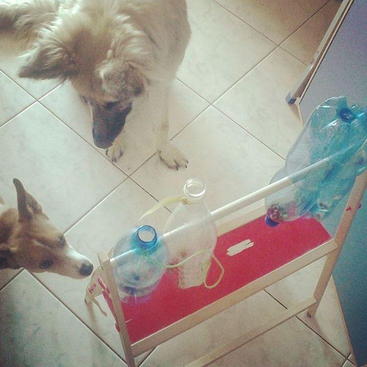 @malicescraftland on #instagram #Gioco per #cani #intelligenti (non per i miei!) #Juguete para #perros #inteligentes (no los mios). #Game for #smart #dogs (Not mine ones). #handmade #craft #fattoamano #upcycling #recycling #riciclocreativo #lovemydog #picoftheday #igdaily #oggicosì ----> Follow me: https://malicecraft.wordpress.com/   ----> instagam: www.instagram.com/malicescraftland/   ----> fb: www.facebook.com/MaliceCrafts