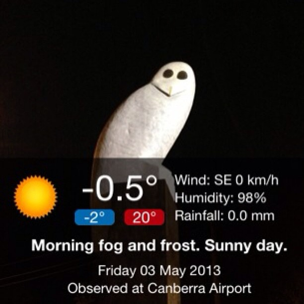 Good morning Mr Owl. Its warmed up to –0.5 °C ❄