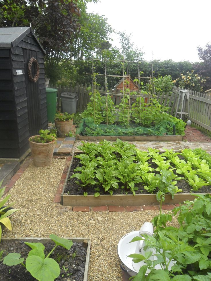 Vegetable patch in Suffolk cottage garden