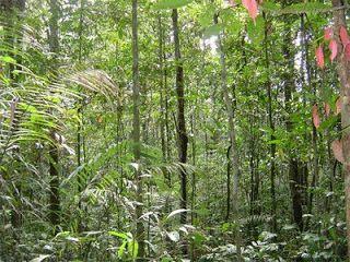 Selva y Bosque Tropical Lluvioso - America del Norte - Problemas ambientales…