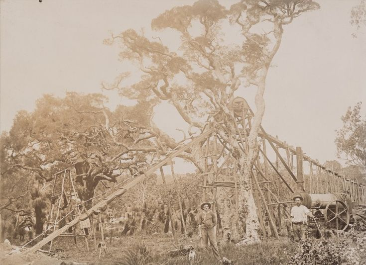 BA859/20: Water pump for tin sluicing, Greenbushes, ca 1910 http://encore.slwa.wa.gov.au/iii/encore/record/C__Rb2043935?lang=eng