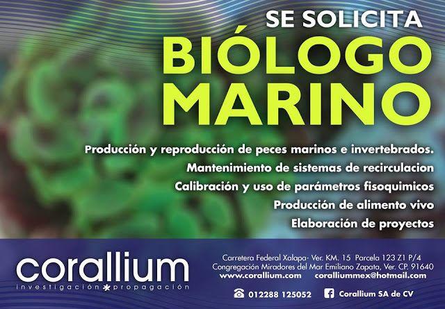 http://remacuicultura.blogspot.mx/2016/05/vacante-biologo-marino-xalapa-ver.html