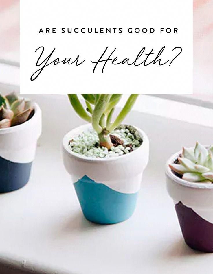 Tiny Potted Plants Are Having A Real Moment But They Re Not Just Adorable Could Actually Extend Your Life Foodphotographytipsforbeginners