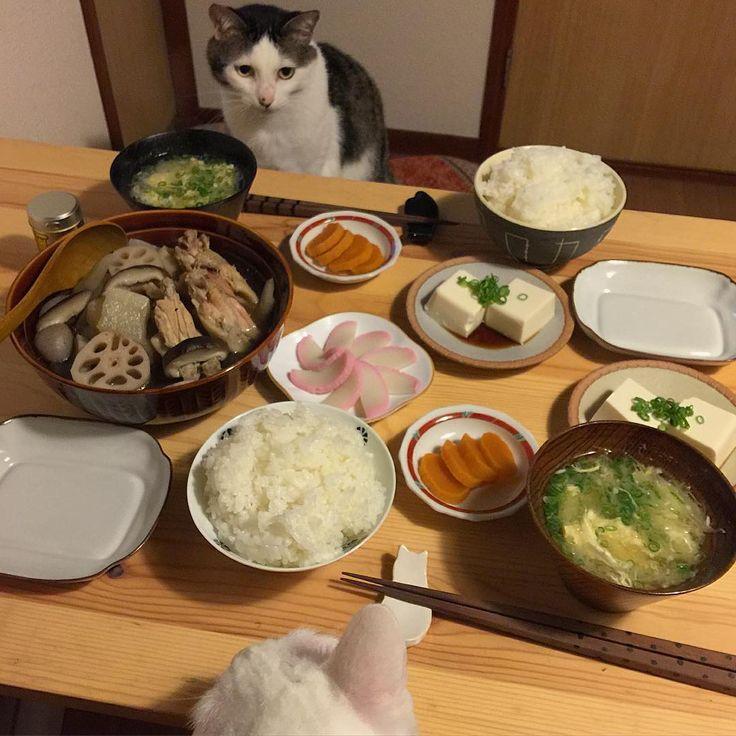 お父はん待ち♩ #八おこめ #ねこ部 #cat #ねこ #八おこめ食べ物 #和食