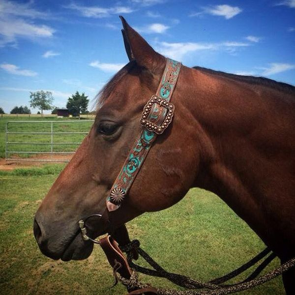 Love tack? You might need a couple of belt headstalls. These pretty leather headstalls are full of details and fancy buckles of course.
