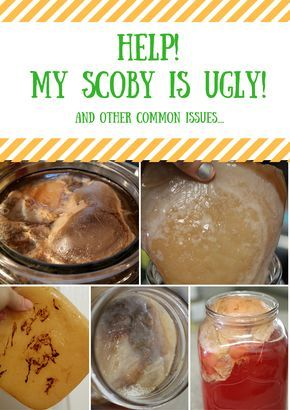 Help My Scoby is UGLY! and other common issues....the many faces of kombucha scobies and how to know what they mean....~Cultured Food Life