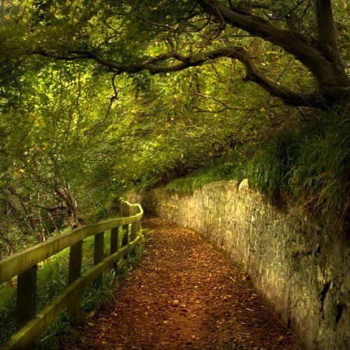 Lovely path.