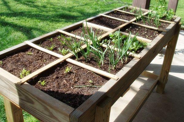 A négyzetméteres kertészkedés alapjai