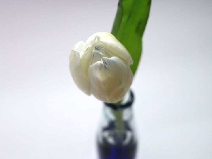 http://happyface313.com/2016/03/17/wir-sehen-blau/ - HappyFace313-wir-machen-blau Tulpe / tulip