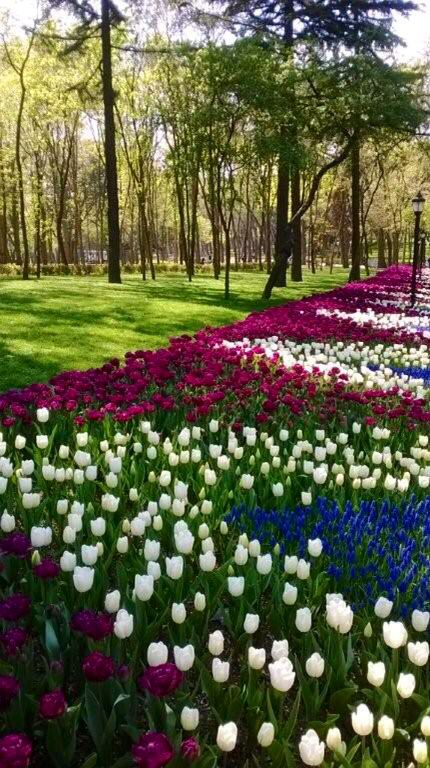 Tulips of all colours in Emirgan Park Istanbul