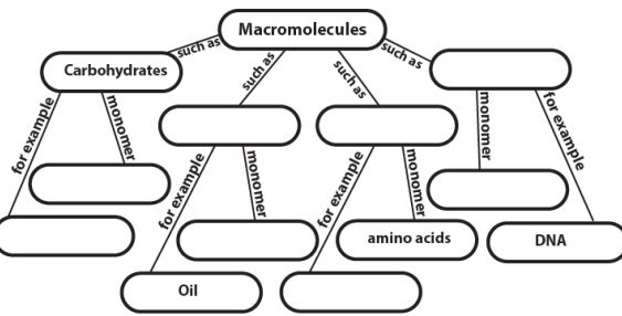 25 best Macromolecules (B.9A) images on Pinterest