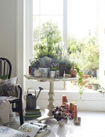 Combina macetas y plantas de distintos tamaños para dar profundidad a la exposición