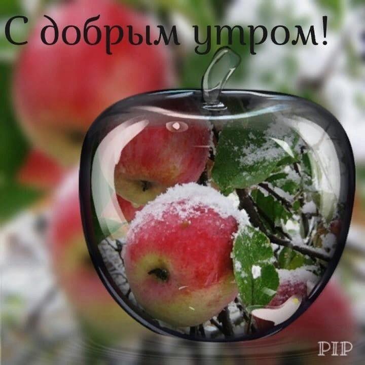 Гуф, фруктовые открытки с добрым утром