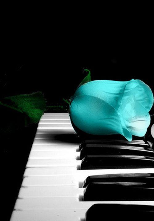 roze in piano