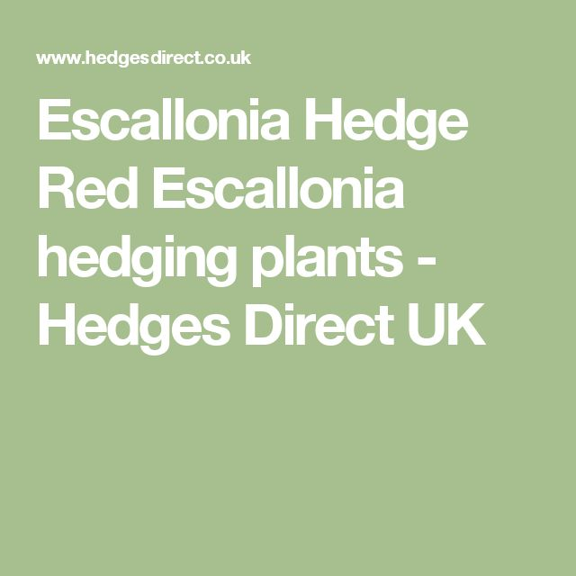 Escallonia Hedge Red Escallonia hedging plants - Hedges Direct UK