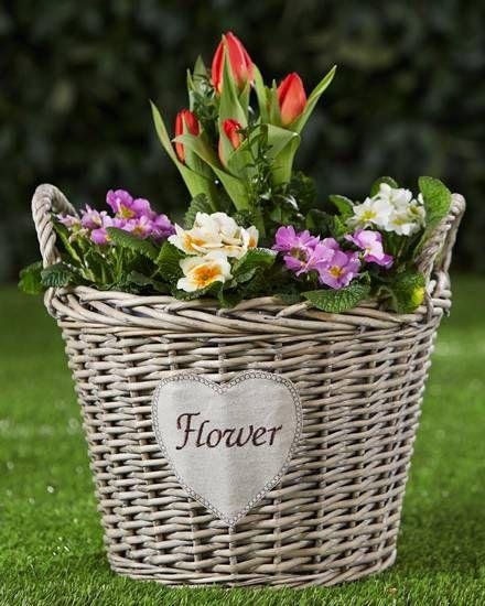 weiden pflanzkorb flower garten pinterest garten pflanzen und weiden. Black Bedroom Furniture Sets. Home Design Ideas